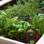 6 Easy Ways on How to Start a Vegetable Patch Successfully