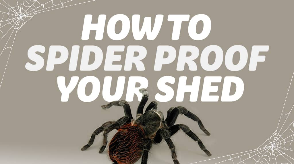 Spider Proofing Your Shed –Yes It Can Be Done