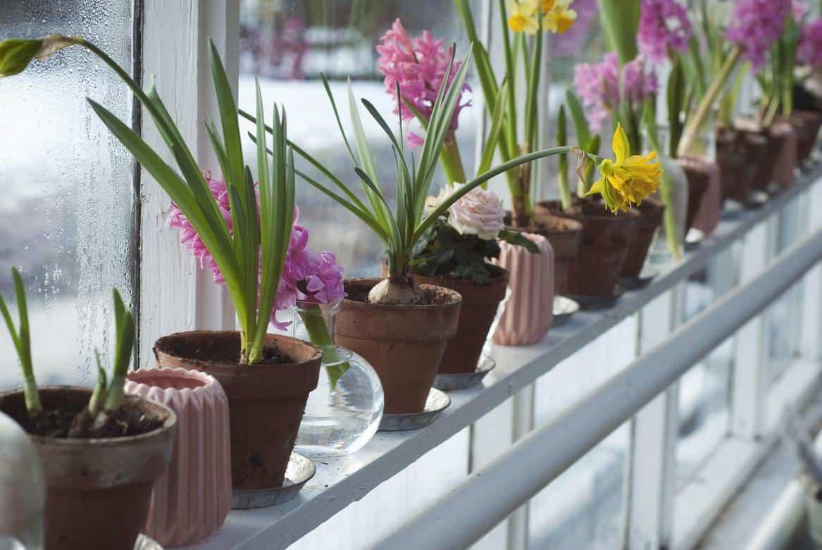 Various mini plant pots on a windowsill