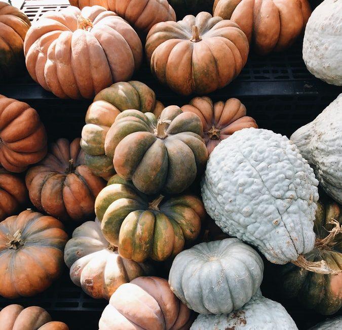A bundle of pumpkins