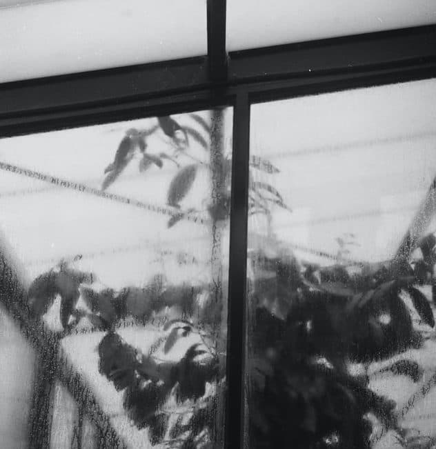 black and white Greenhouse with rain on the windows and plants