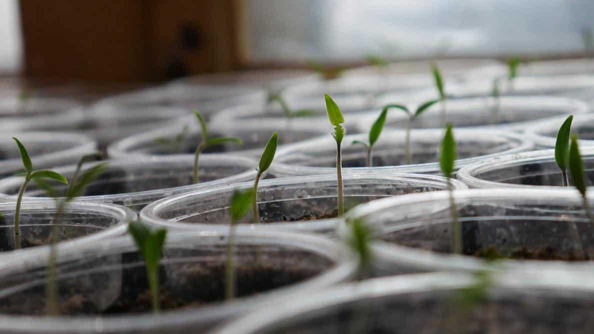 Various seeds in plastic pots