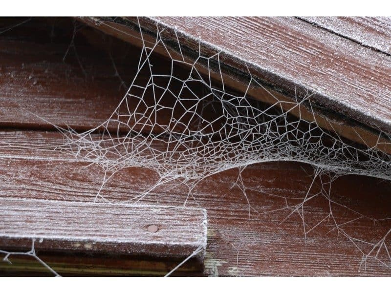 spider cobweb under the eaves of a wooden shed