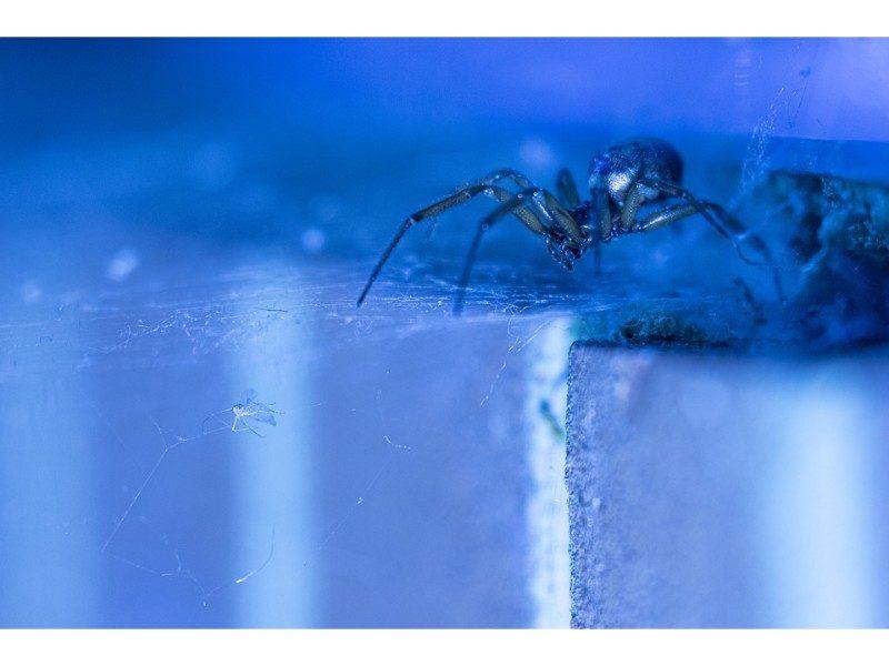 spider against blue-light background