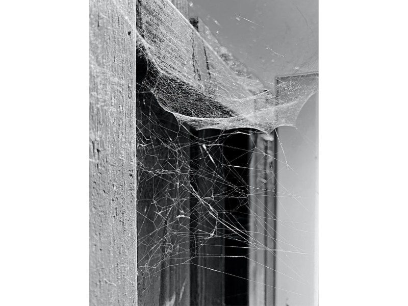 spider web on building in black and white