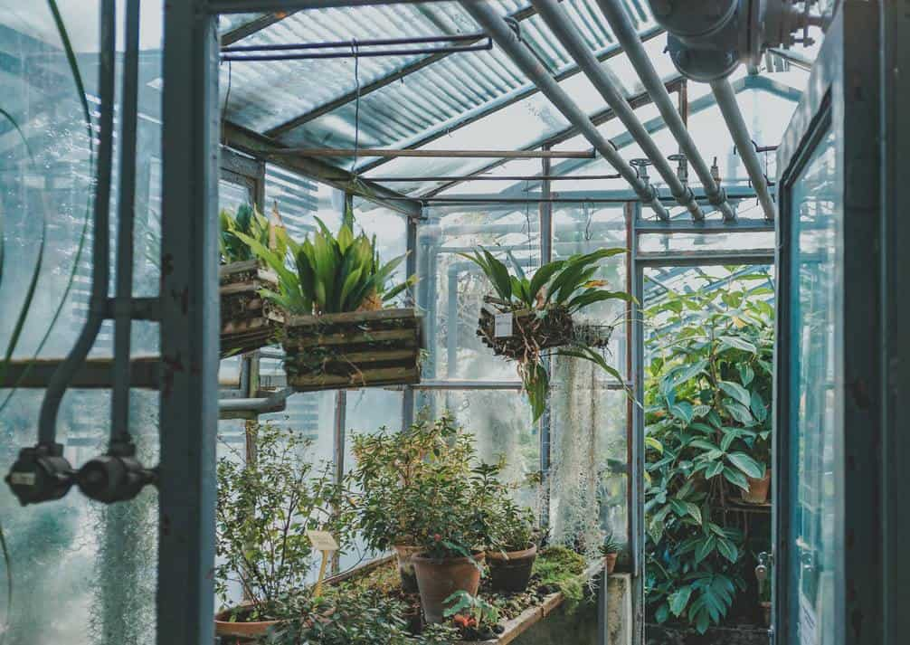 Glass greenhouse with plants inside