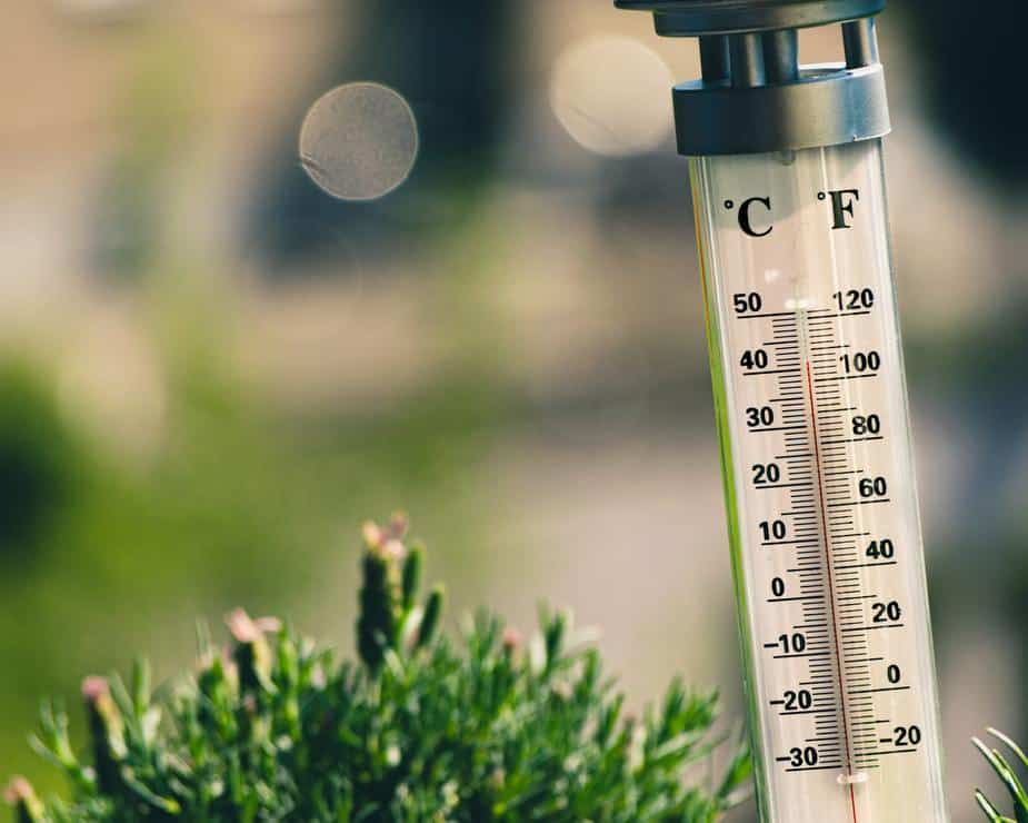 Thermometer in plants