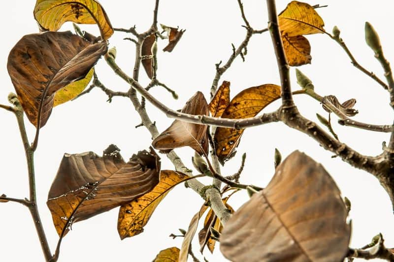6-effective-ways-to-save-a-plant-1-trim-away-all-the-dead-leaves-unsplash