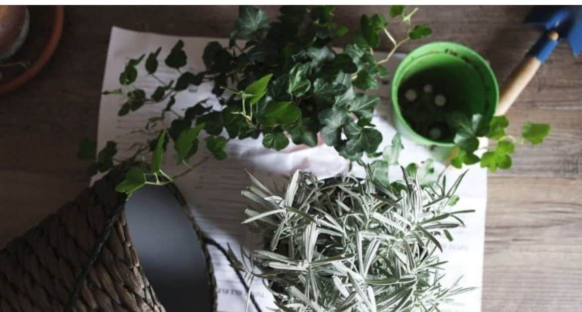 6 Effective Ways to Save a Plant