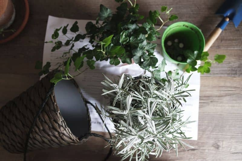 6-effective-ways-to-save-a-plant-3-consider-repotting-unsplash