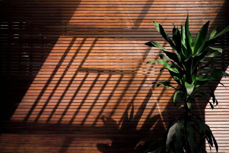 6-effective-ways-to-save-a-plant-5-limit-the-sunlight-exposure-unsplash