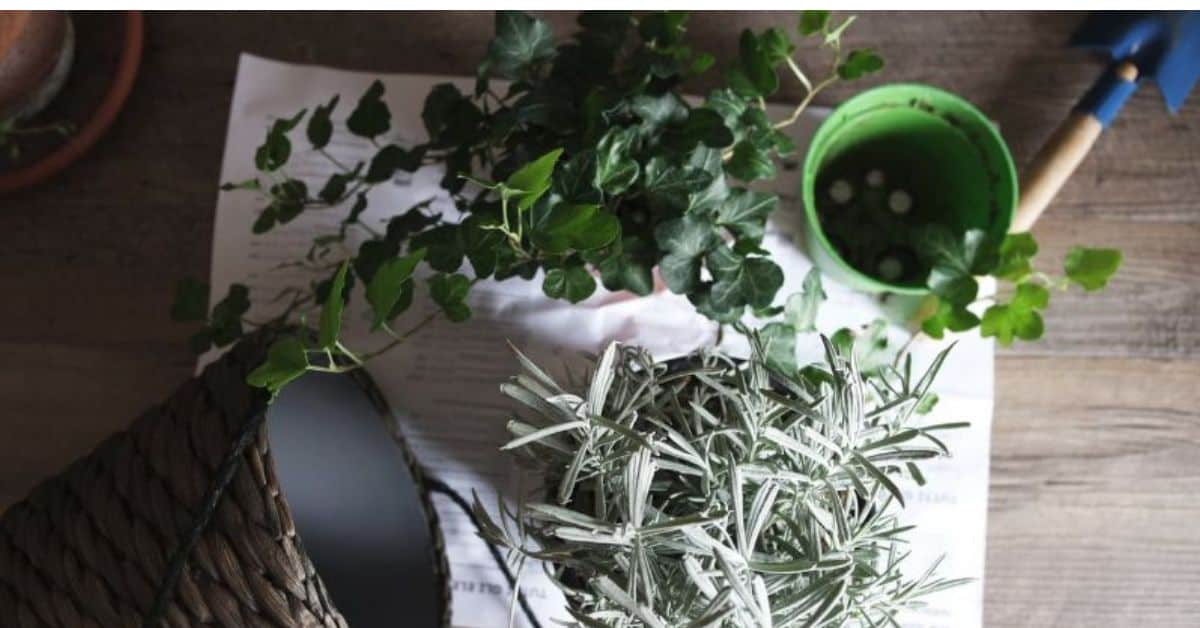 6-effective-ways-to-save-a-plant
