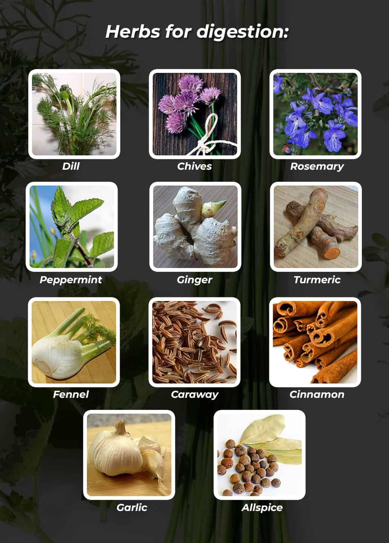 6-health-benefits-of-herbal-gardening-digestion