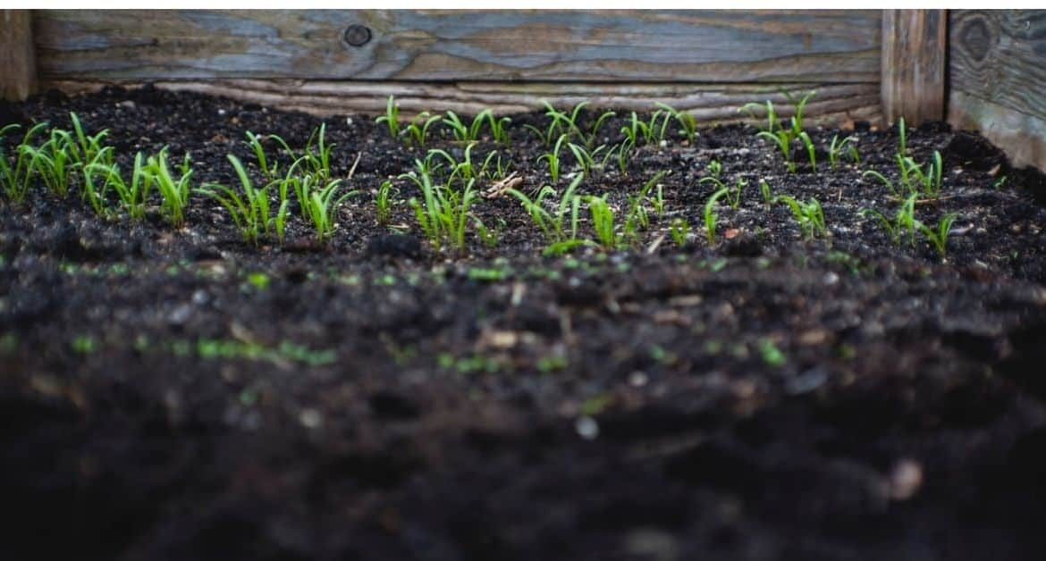 6 Ways to Reuse Waste for a More Sustainable Garden