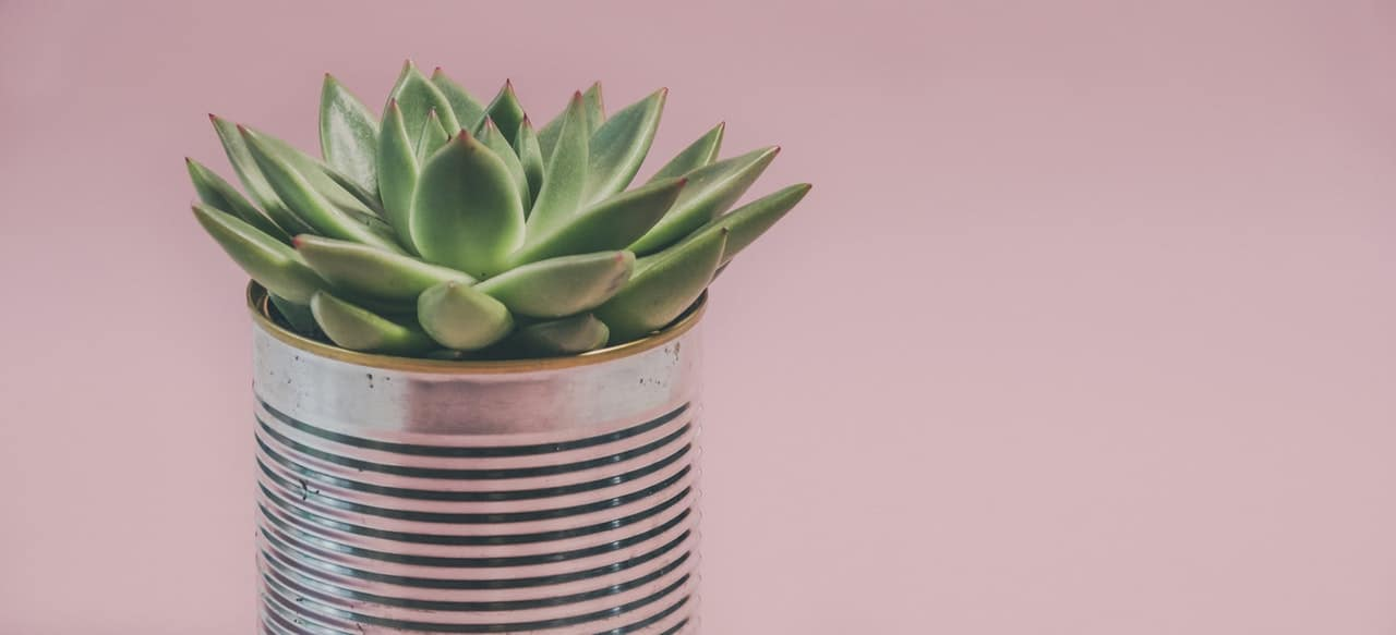 9-best-recycled-crafts-3-tin-can-plant-pot-pexels