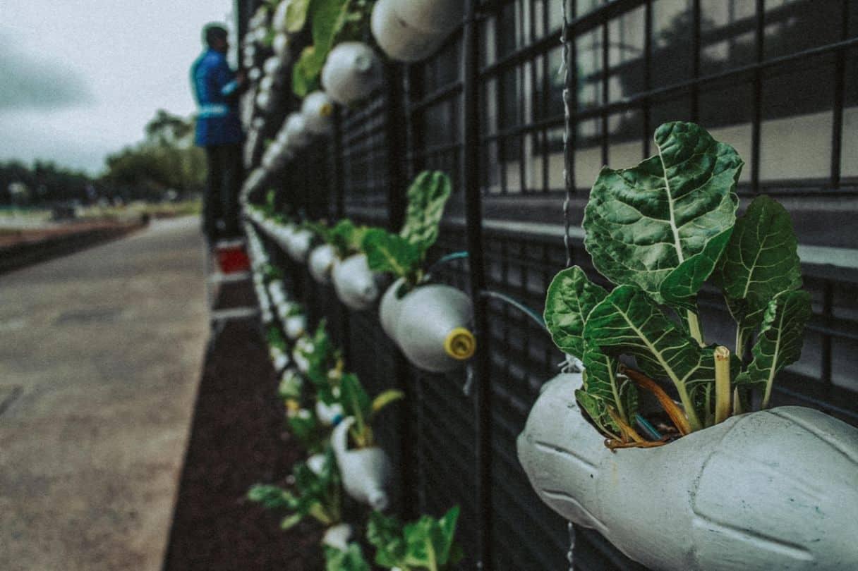 9-best-recycled-crafts-4-vertical-plastic-botle-garden-pexels