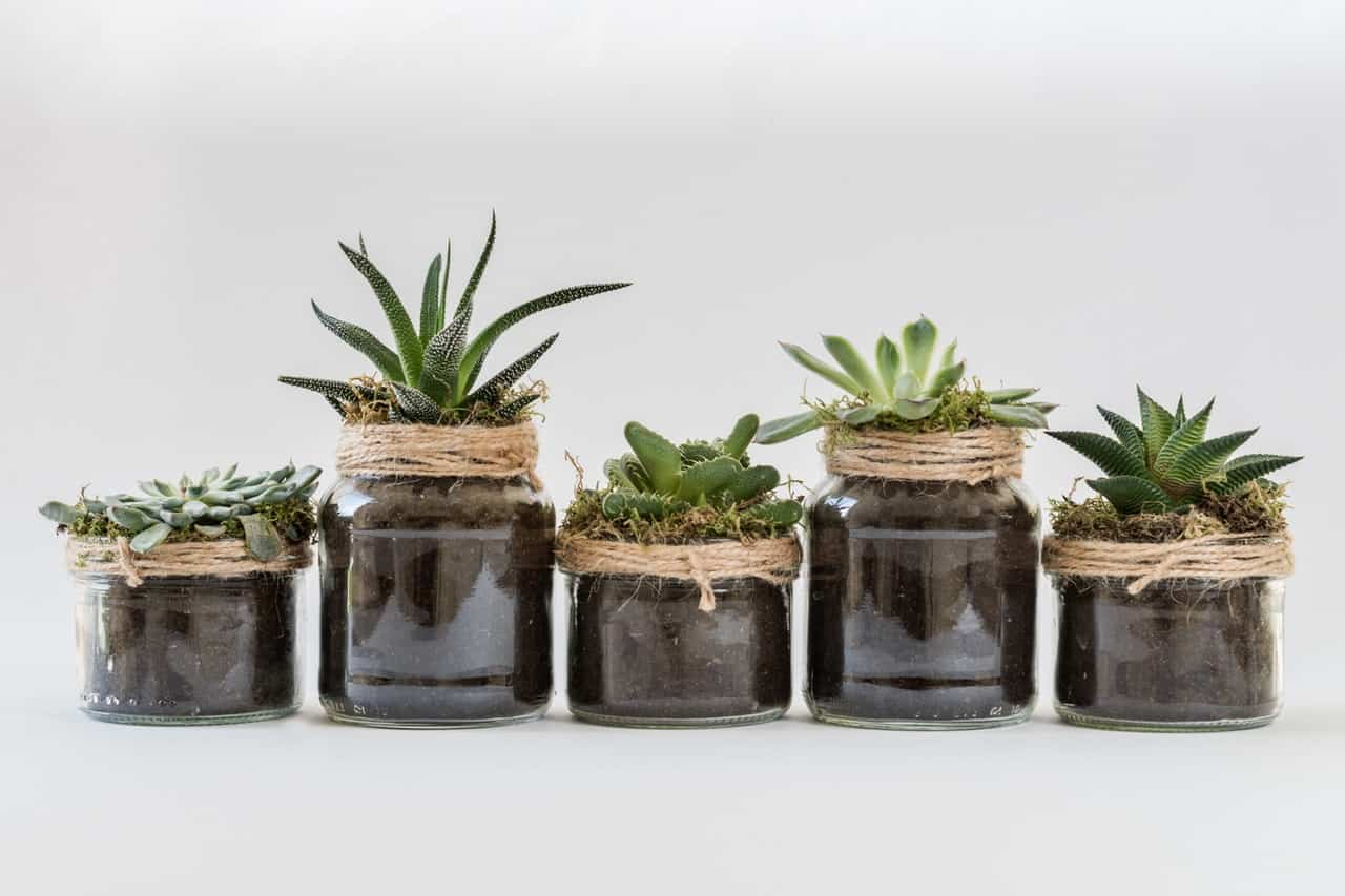 9-best-recycled-crafts-7-mason-jar-plant-pots-pexels
