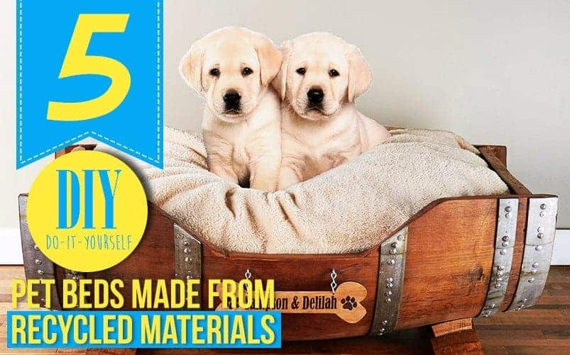 5 Do-It-Yourself Pet Beds Made from Recycled Materials