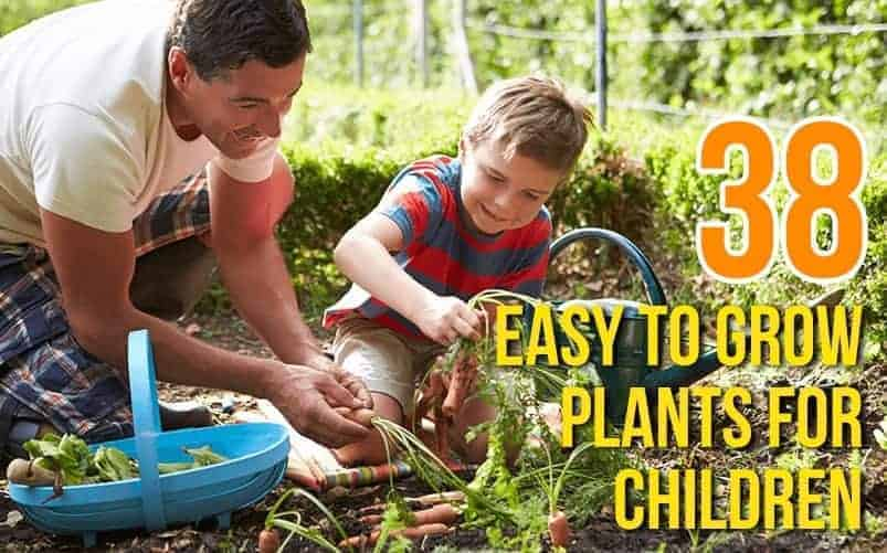 38 Easy to Grow Plants For Children