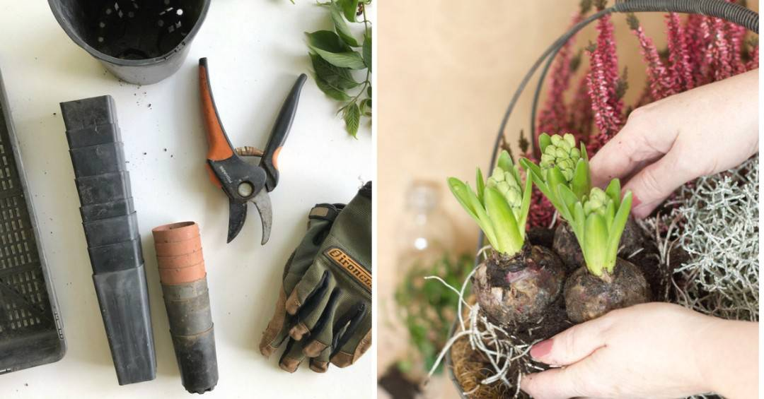 Discover the 7 Reasons Why Gardening Is Good for Your Health