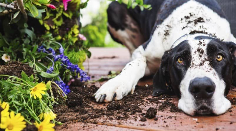 Dog-Proof Your Garden With These Top Ten Tricks