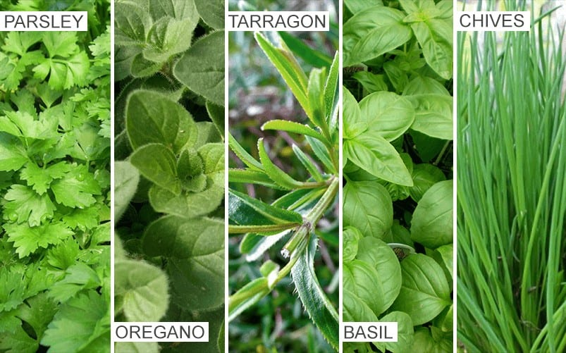 Herb1
