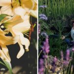Hot or Not: Here's What to Seek and Avoid in the UK Gardens in 2019