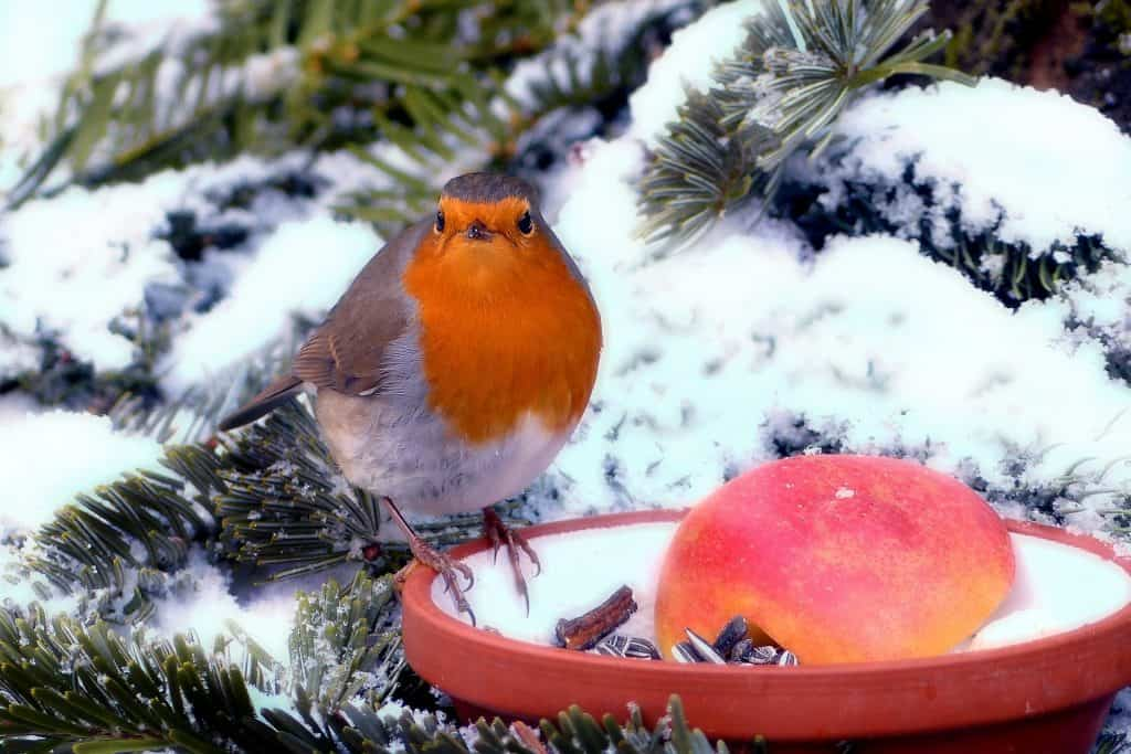 How to Create a Bird-Friendly Garden This Winter