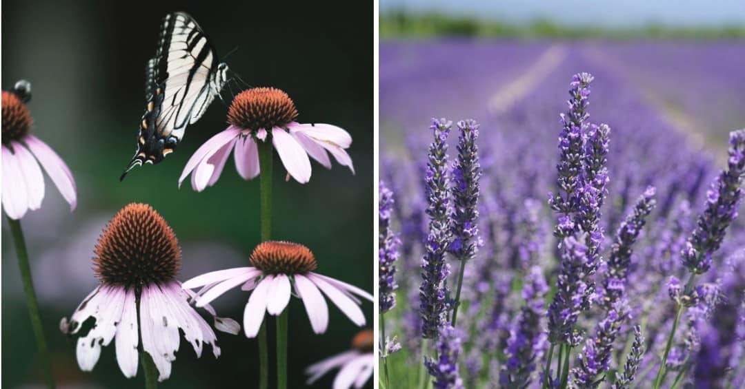 How to Transform Your Garden into a Butterfly Garden