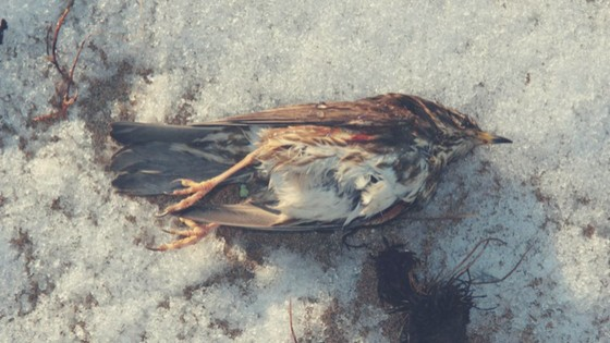 in-any-cases-that-other-small-animals-like-a-bird-die-of-frost-inside-your-yard-its-time-to-learn-the-art-of-taxidermy-this-winter