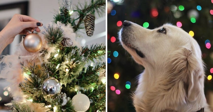 Nine Key Tips: How to Pet Proof Your Christmas Tree