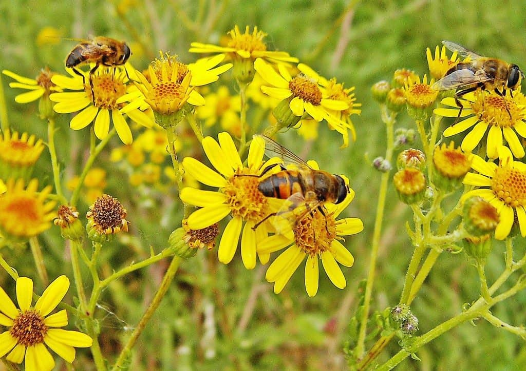 Beekeeping Benefits
