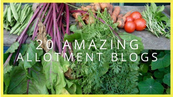 20 Amazing Allotment Blogs
