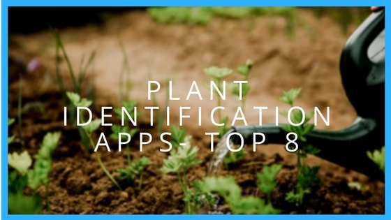 Plant Identification Apps: Top 8