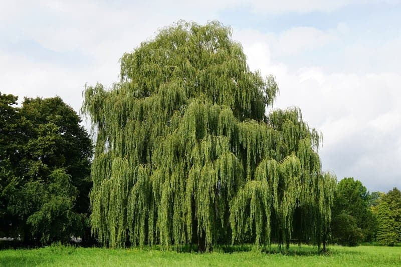 UK Trees: A Guide To The 9 Fastest Growing UK Trees