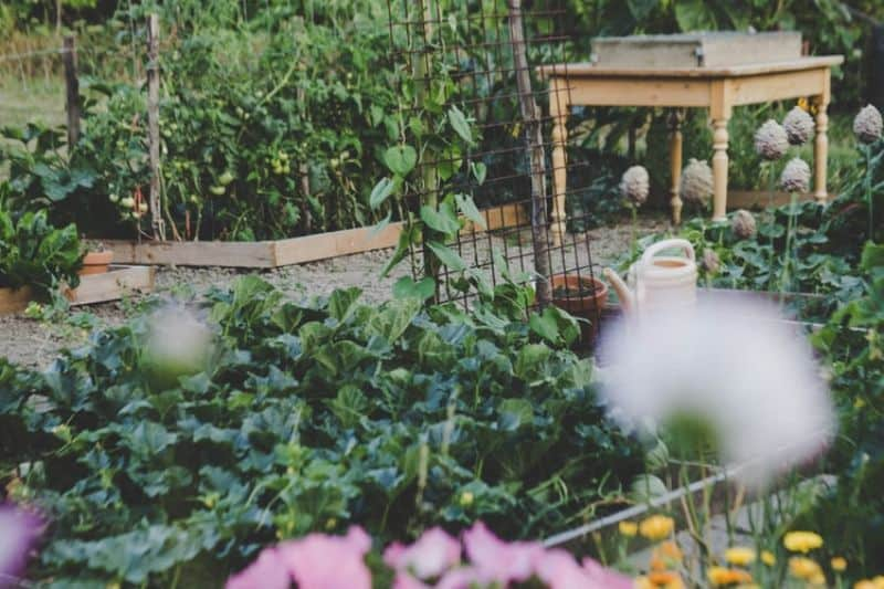 april-gardening-tips-and-chores-1-plant-perennial-herbs-and-vegetable-outdoors-unsplash.jfif