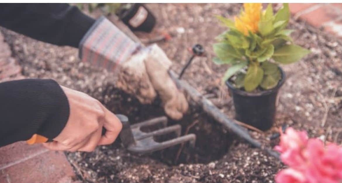 A Gardener's Monthly Guide: April Gardening Tips and Jobs