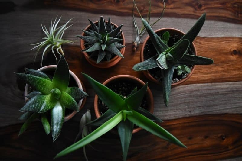 april-gardening-tips-and-chores-6-move-houseplants-outdoors-unsplash.jfif