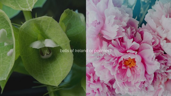bells-of-ireland-or-peonies-1