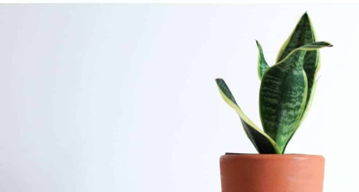 9 of the Best Air Purifying Houseplants to Detoxify Your Home