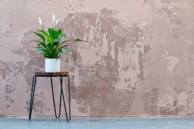 best-air-purifying-houseplants-to-detoxify-your-home-2-peace-lily-unsplash