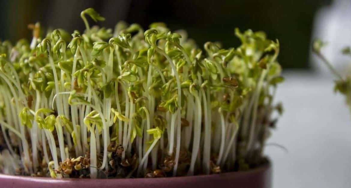9 Best Indoor Crops You Can Grow At Home