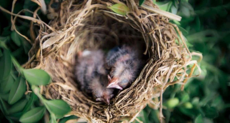 Bird-Friendly Garden: Seven Ways to Help Breeding Birds