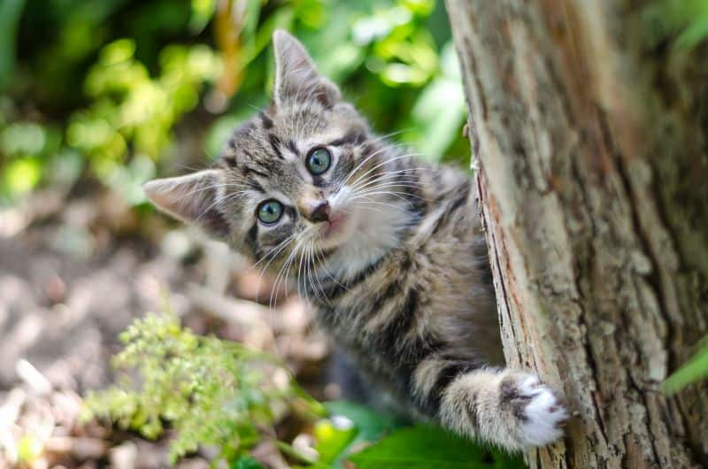 bug-proof-shed-tips-4-cats