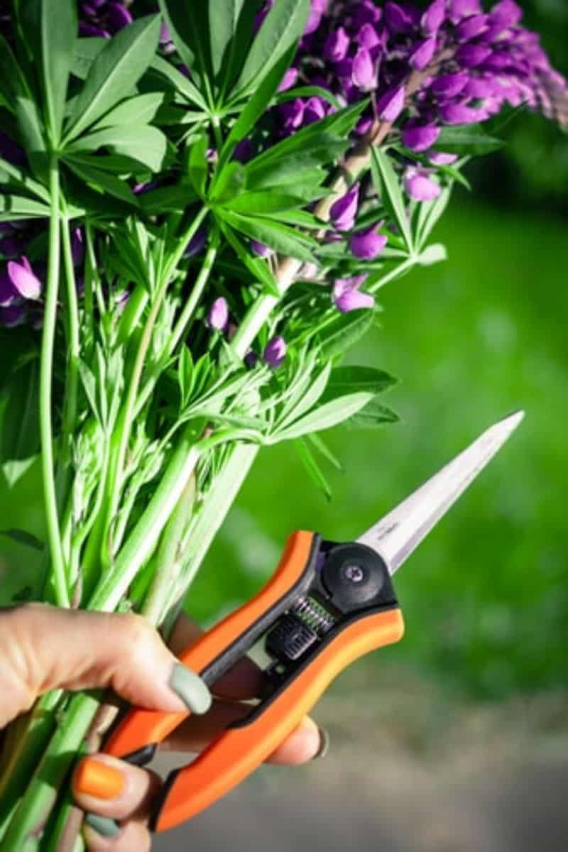 checklist-guide-and-cleaning-tips-to-garden-spring-cleaning-1-prune-perennials-unsplash.jfif