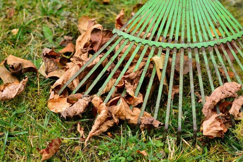 checklist-guide-and-cleaning-tips-to-garden-spring-cleaning-3-spring-raking-pixabay