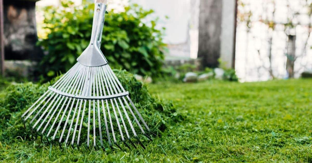 common-garden-problems