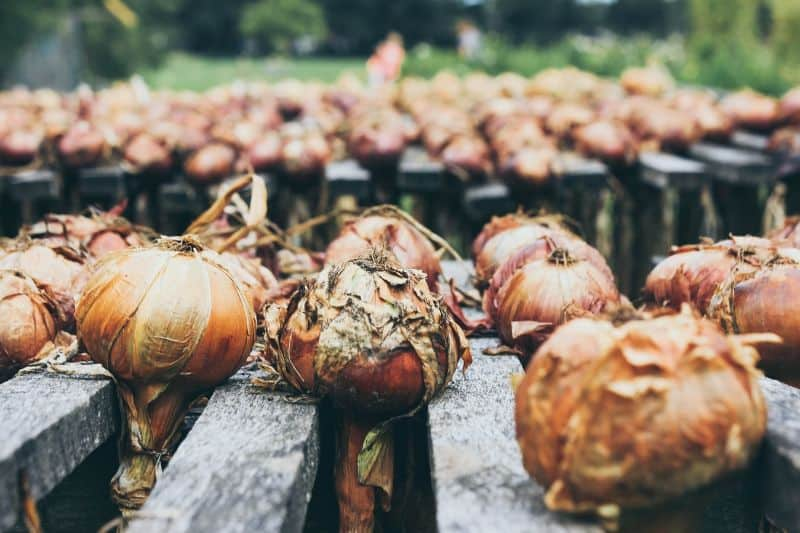 common-gardening-terms-you-should-know-4-bulb-unsplash