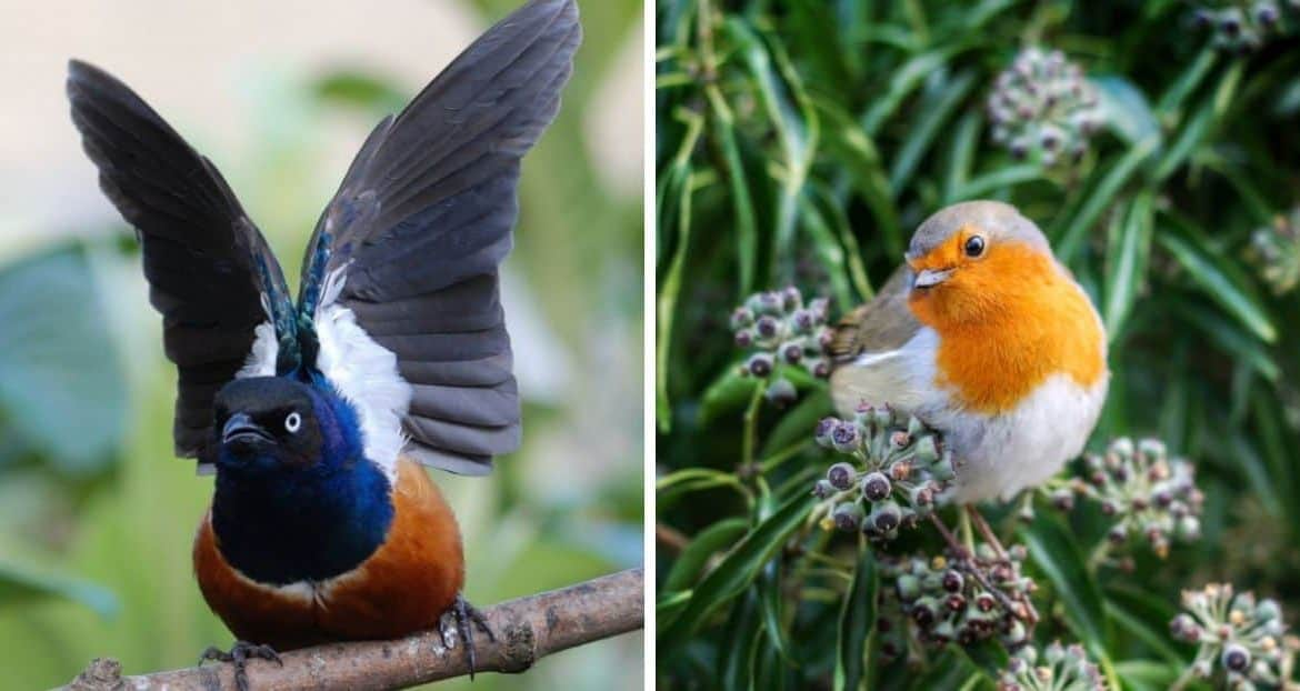 How to Identify the UK's 10 Most Common Birds