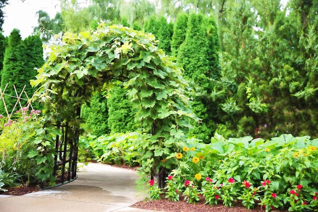 cottage-style-garden-6-arbours-and-trellises-pixabay